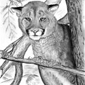 Cougar In Tree by Russ  Smith