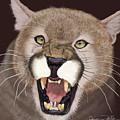 Cougar by Jason Fella