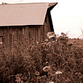 Country Barn by Audrey Venute