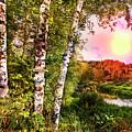 Country Birch by Debra and Dave Vanderlaan
