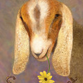 Country Charms Nubian Goat With Daisy by Nancy Lee Moran