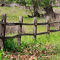Country Fence by Carol Groenen