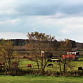 Country Life by Jayne Gohr