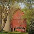 Country Life by Susan Rissi Tregoning