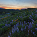 Country Meadow Sunset by Mike Dawson