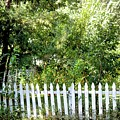 Country Picket Fence by Janet K Wilcox