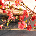 Country Quince by Jan Amiss Photography