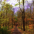 Country Road In Autumn by Bill Cannon