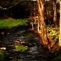 Country Stream by David Lane