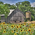 Country Sunflowers by Lori Deiter