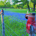 Country Western Blue Bonnets by Third Eye Perspectives Photographic Fine Art