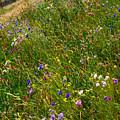 Country Wildflowers I   by Shari Warren
