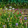 Country Wildflowers II by Shari Warren