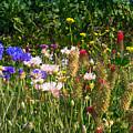 Country Wildflowers Iv by Shari Warren