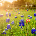 Country Wildflowers by TK Goforth