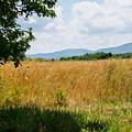 Countryside Of Italy 2 by Andrea Mazzocchetti
