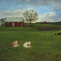 Countryside Red Barn Farm Scene by Anna Louise