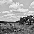 Countryside Views 3 by Jonathan Garrett