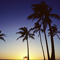 Couple And Sunset Palms by Carl Shaneff - Printscapes