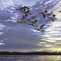 Courtship Flight by Anthony J Padgett