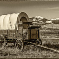 Covered Wagon by Paul Freidlund
