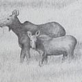 Cow And Calf Moose  by Harry Moulton