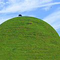 Cow Eating On Round Top Hill by Mike McGlothlen