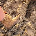 Cow Girl Rodeo  by LeeAnn McLaneGoetz McLaneGoetzStudioLLCcom