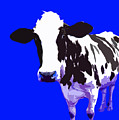 Cow In A Blue World by Peter Oconor