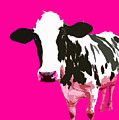 Cow In A Pink World by Peter Oconor