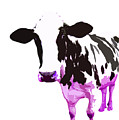 Cow In A White World by Peter Oconor