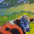 Cow Lying Down On A Sunny Day by Mike Jory