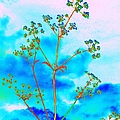 Cow Parsley Blossom 2 by Martine Murphy