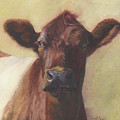 Cow Portrait IIi - Pregnant Pause by Terri  Meyer