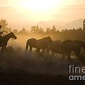 Cowboy Chasing Horses by Jean-Louis Klein & Marie-Luce Hubert