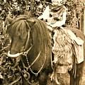 Cowboy by Robert Walters