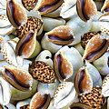 Cowrie by Naveen Cb