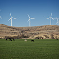 Cows And Windmills by Ricky Barnard