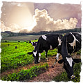 Cows At Sunset Bordered by Debra and Dave Vanderlaan