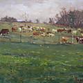 Cows In A Farm, Georgetown  by Ylli Haruni
