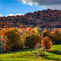 Cows In Pomfret Vermont Fall Foliage by Jeff Folger