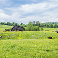 Cows In The Country by Lisa Lemmons-Powers