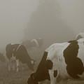 Cows In The Mist by Gaspar Avila