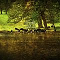 Cows by Svetlana Sewell