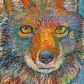 Coyote Chill Stage Two by Kendall Kessler