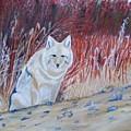 Coyote by Thomas McCaskie