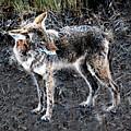 Coyote Waits by David Lee Thompson