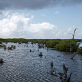 Ominous Clouds Over A Cozumel Mexico Swamp  by Kenneth Lempert