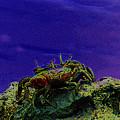 Crab Cakez 5 by Kim Pate