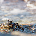 Crab Looking For Food by David Buhler